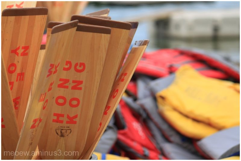 dragon boat paddles