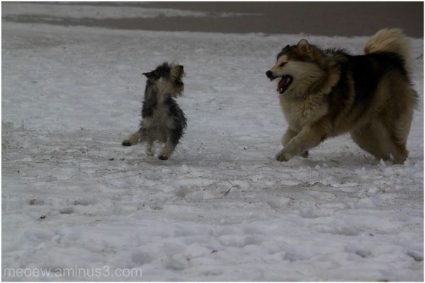 play fight....