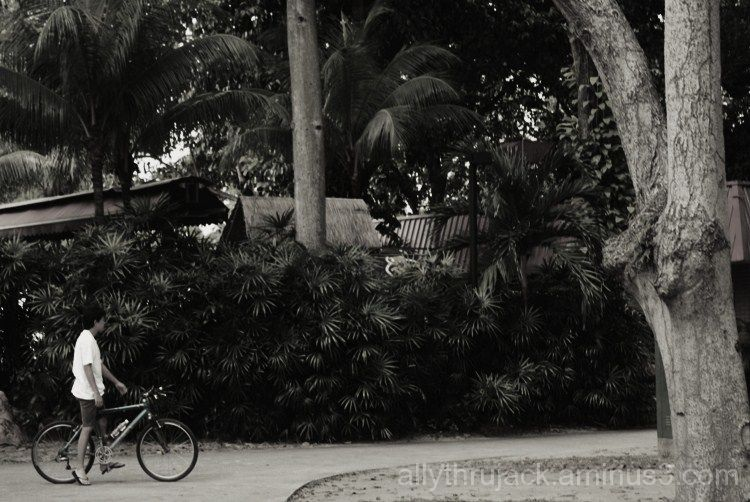 bicycle, boy, directions, park