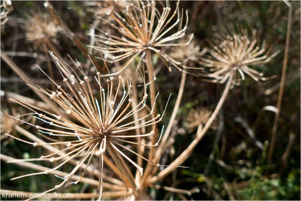 flores de pinchos