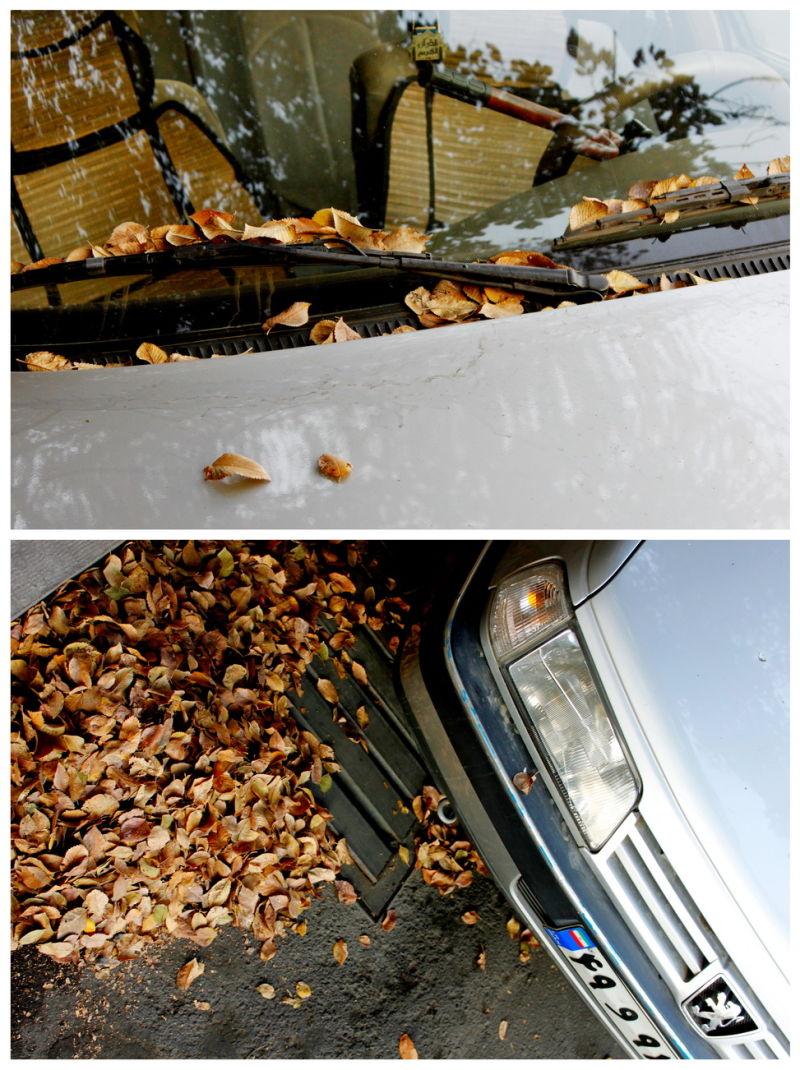 Autumn Footprints....