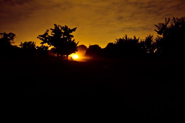 sunrise photo  plant nature