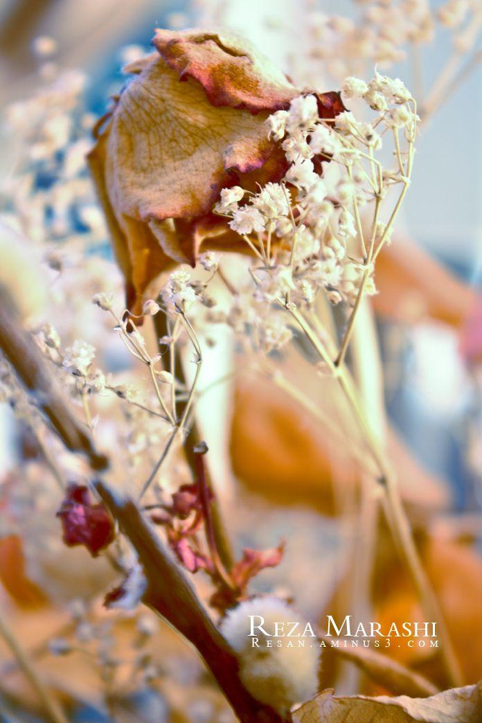 plant nature photography fotografie reza marashi 4