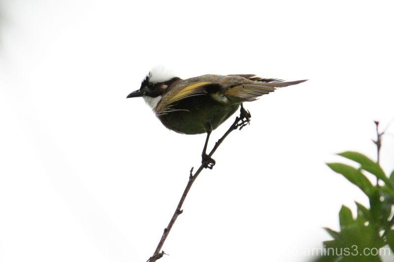 wenxi enhe photoblog 温溪 鸟 Bird