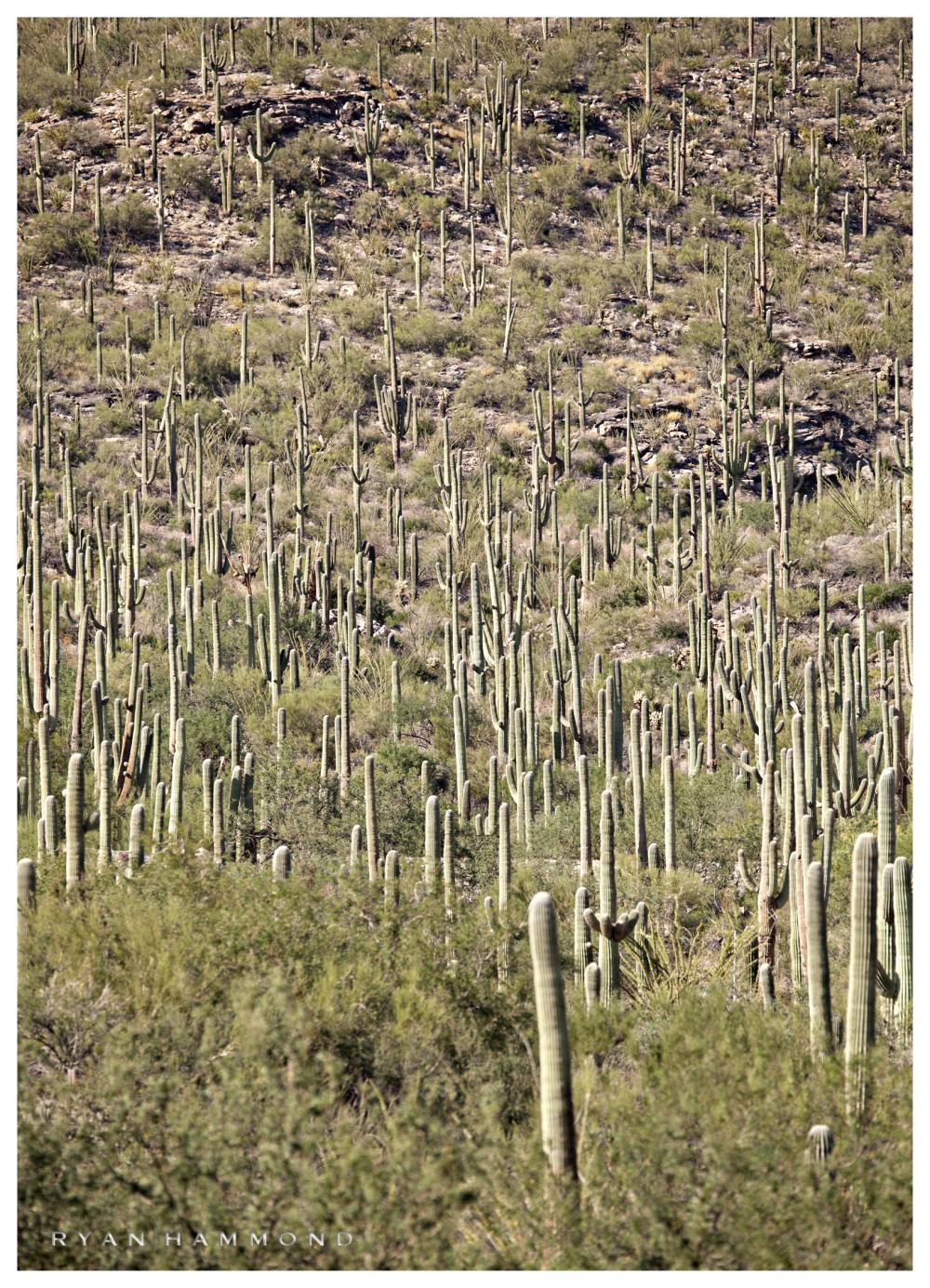 Tucson photographer Ryan Hammond