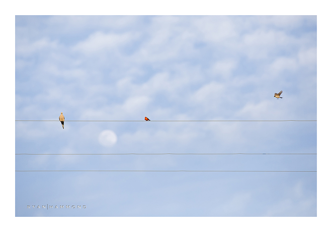 birds, wire, sky, moon