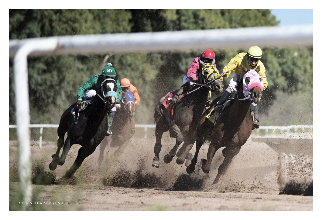 Horses, horse racing, action, jockey, Arizona