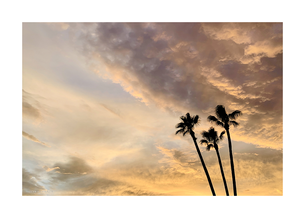 sunset palm trees silhouette