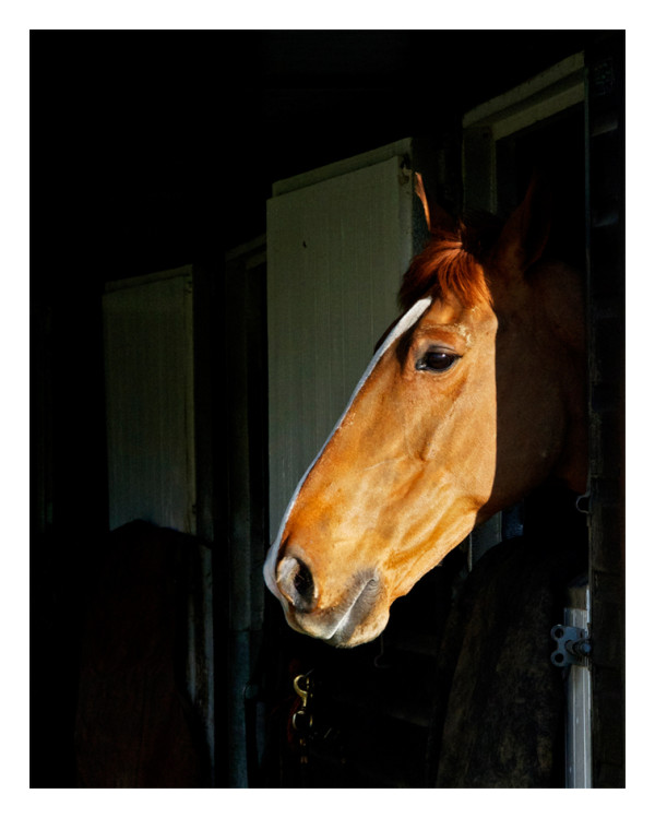 A Horse, A Horse. . .