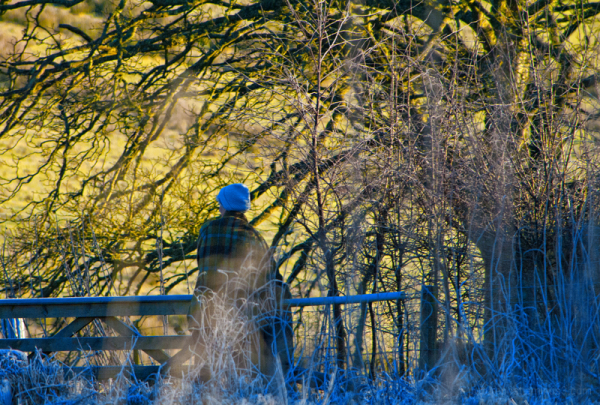 Scenes from a winter's dog walk # 4