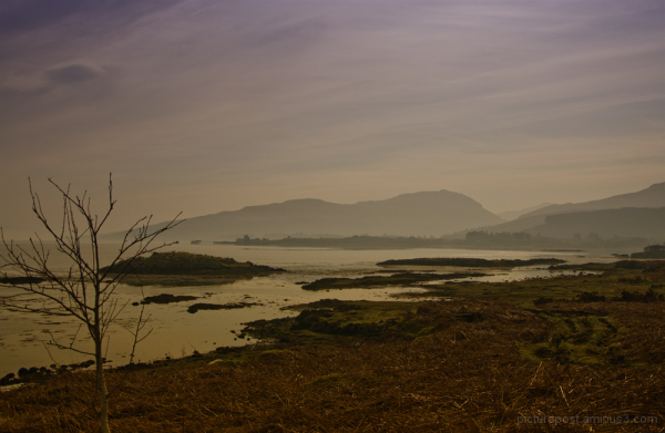 Magical Mull