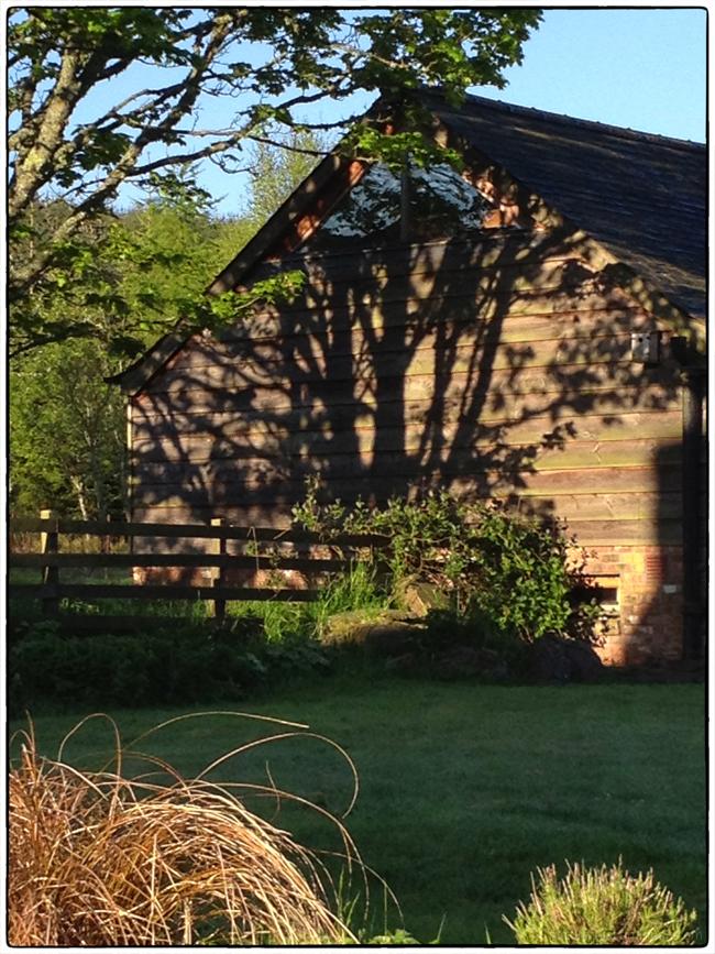 Wood Shadows