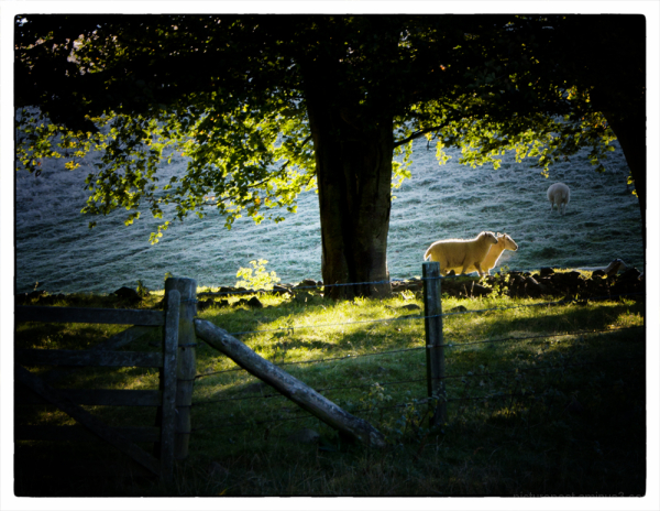 Scenes from an early autumn dog walk #5