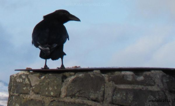 bird on the lyle hill