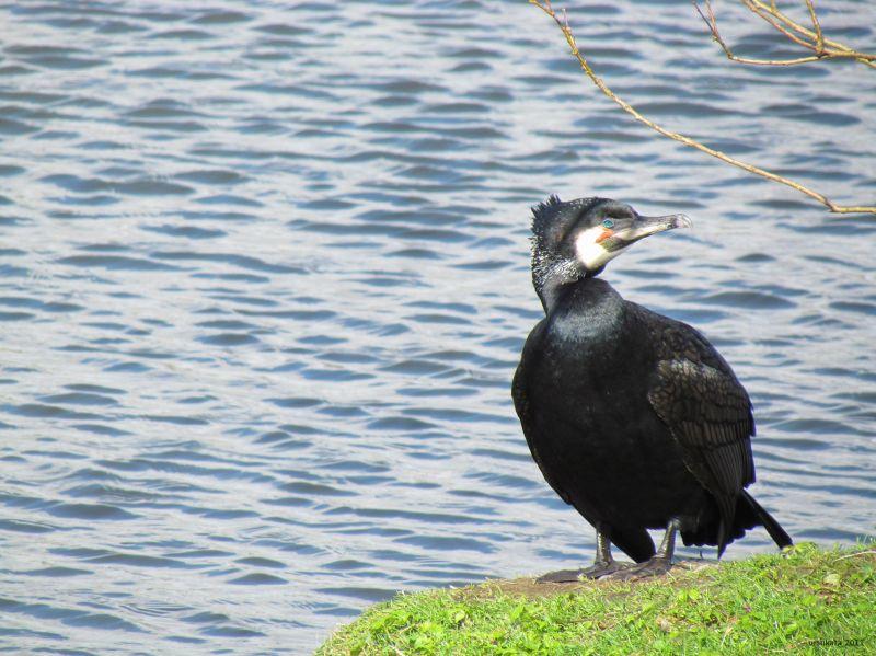 A bird at the dam