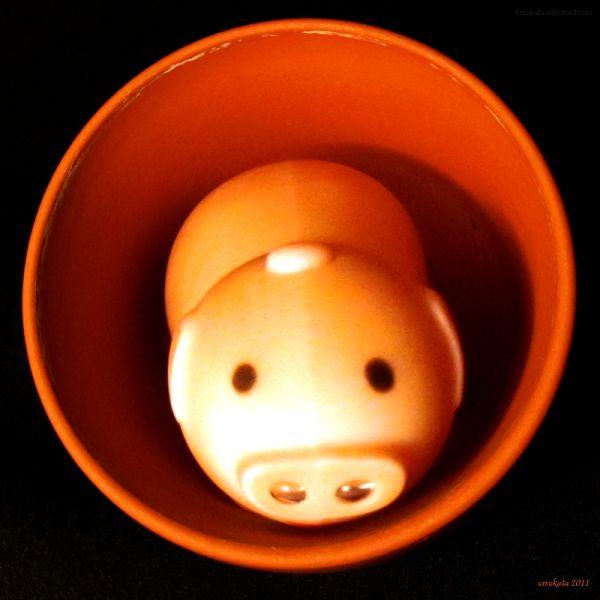 piggy in a pot