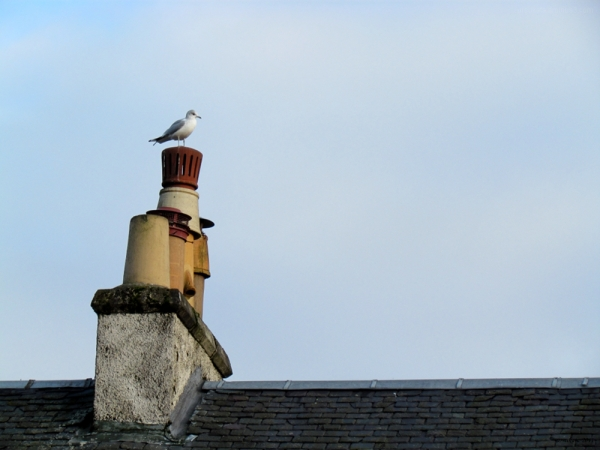A Gull and Chimneys