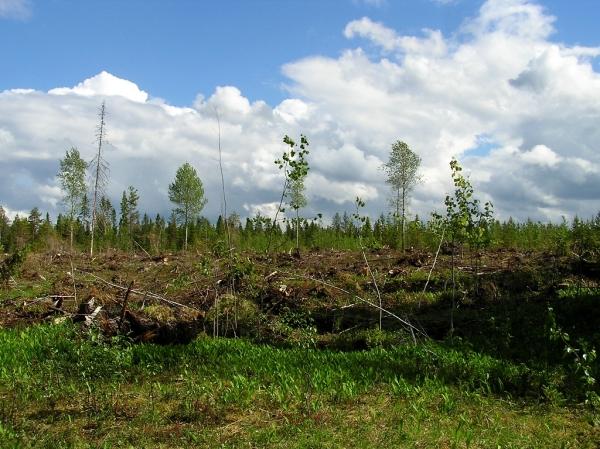 Summer in Oulu