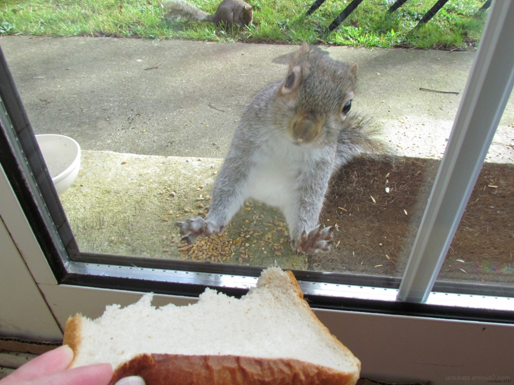 Squirrel behind the window