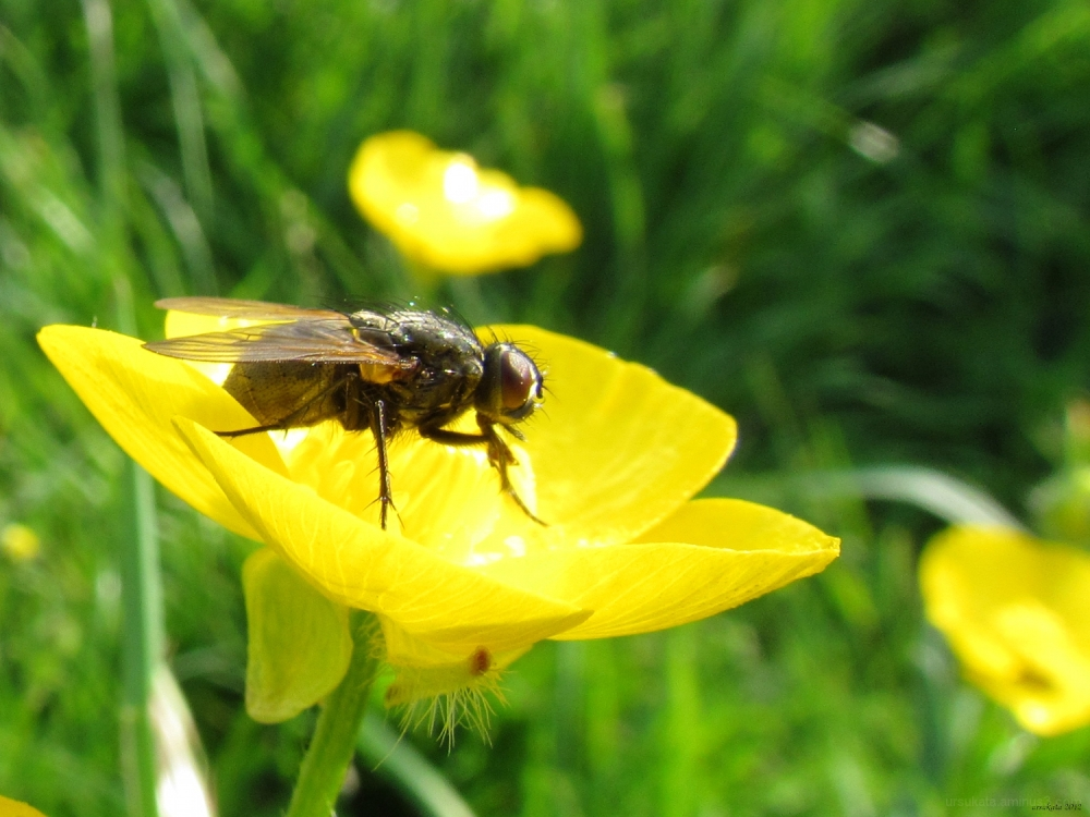 A fly and a flower