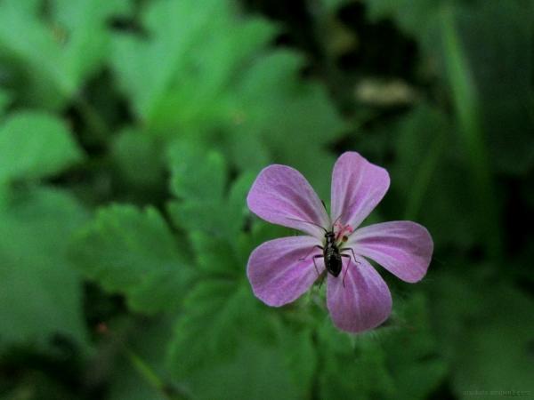 A bug on a flower