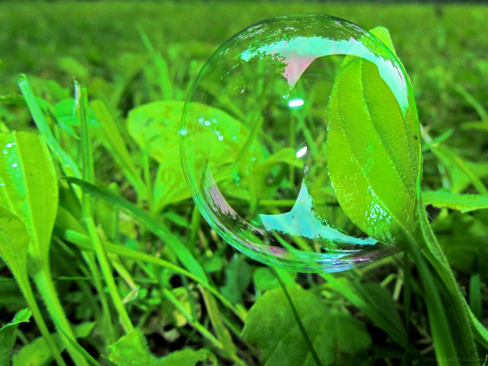 Soap bubble on a leaf