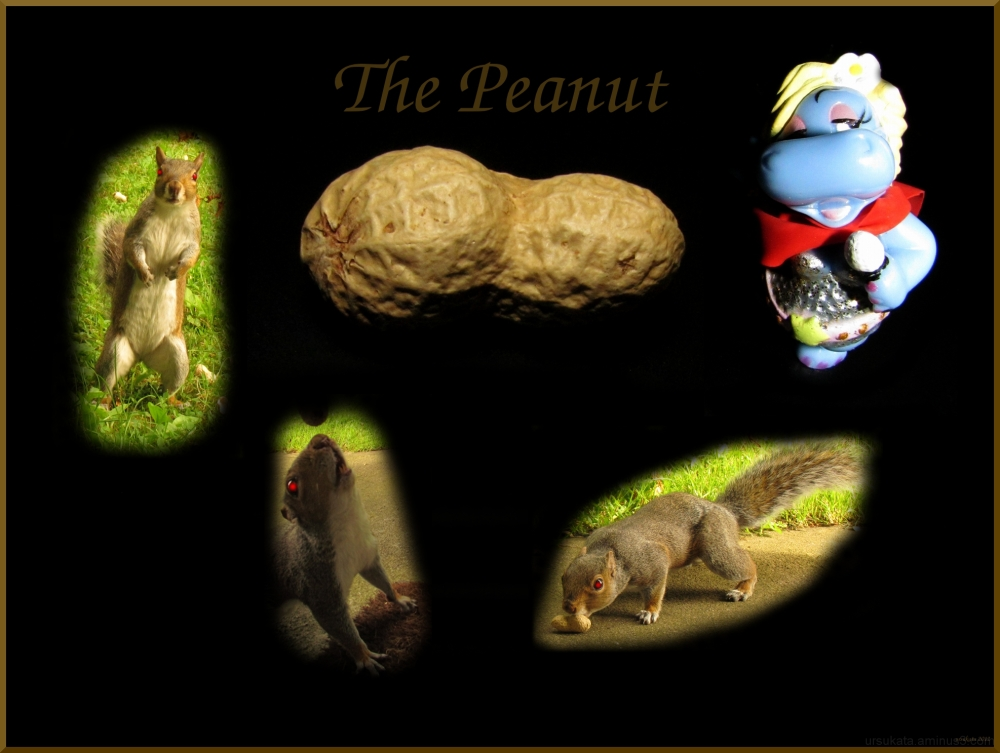 The story of the peanut