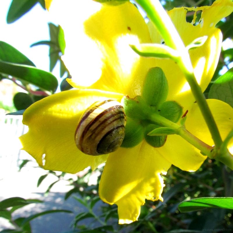 Behind a flower