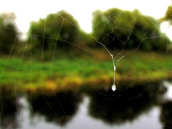 A view behind the web