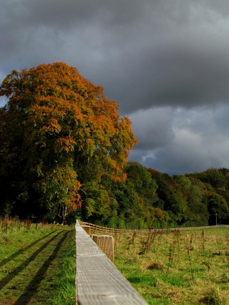 Autumn in a park