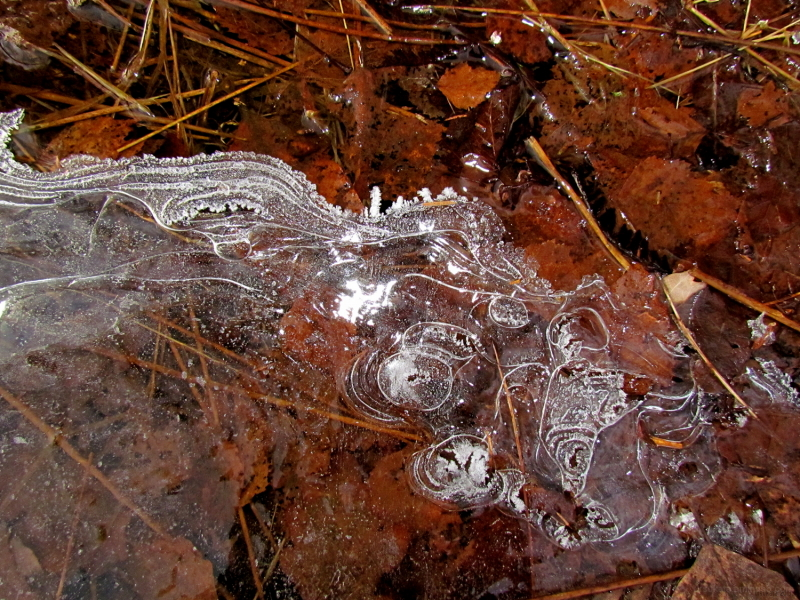 Ice in the forest