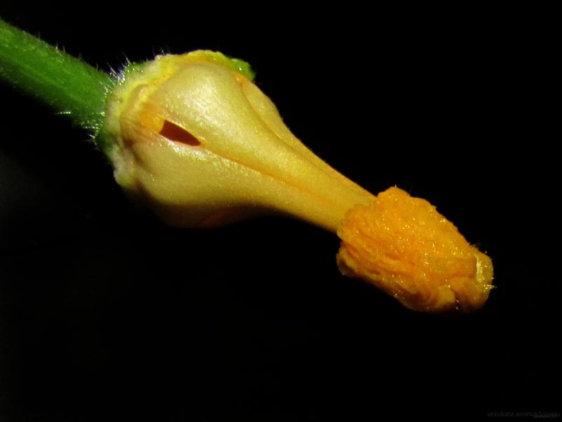 In a zucchini flower