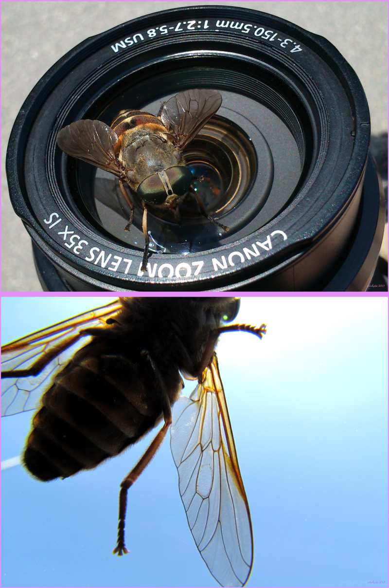 Insect on the lens