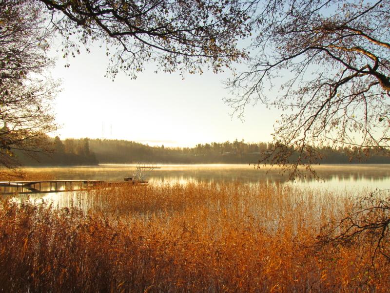 mist on a lake