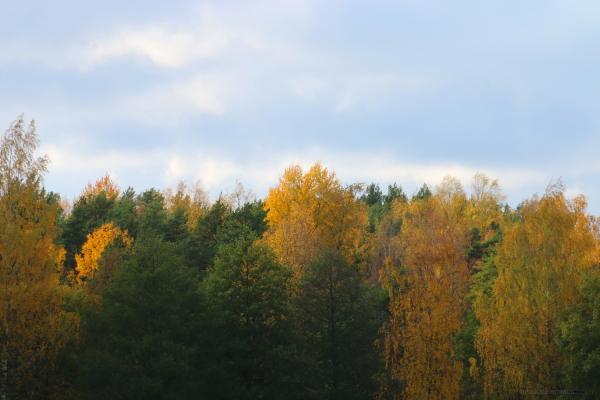 autumn in uki