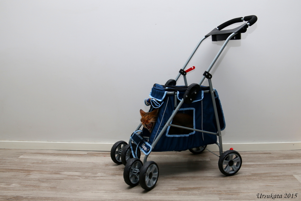 Pena and his stroller