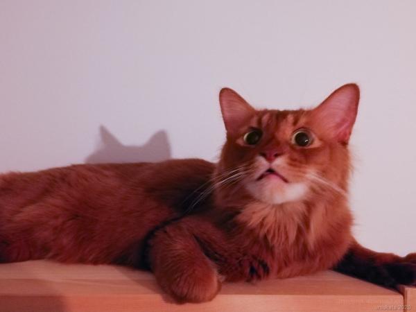 Punkku cat