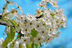 Calming Flowers