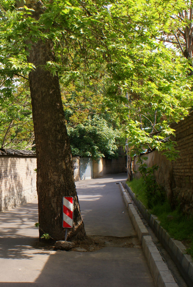 A tree blocked alley