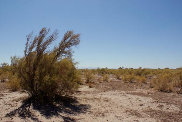 Damghan Deserts
