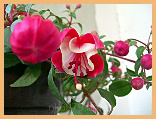 My beautiful flower
