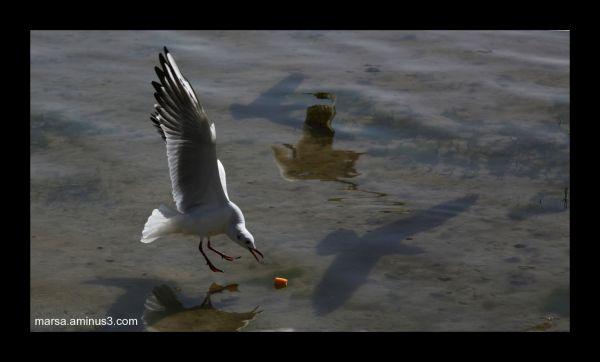 Birds of Zayanderood in Isphahan