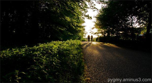Bicycles at dawn