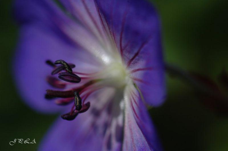 Fleur .