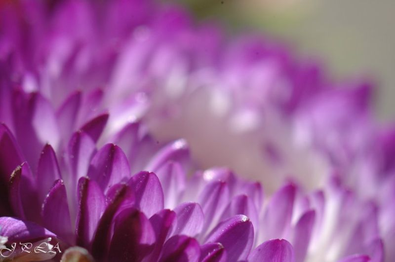 Interlude floral #2