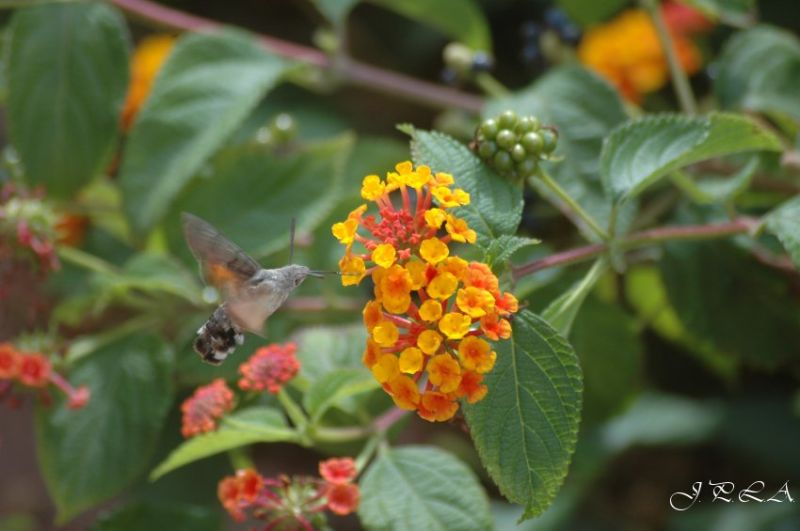 Interlude floral #4