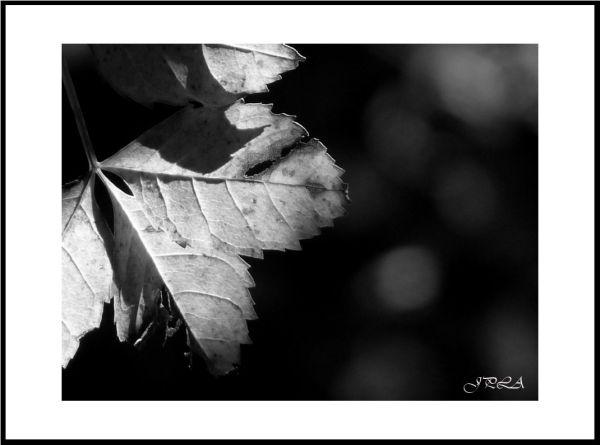 Lumière d'automne #2