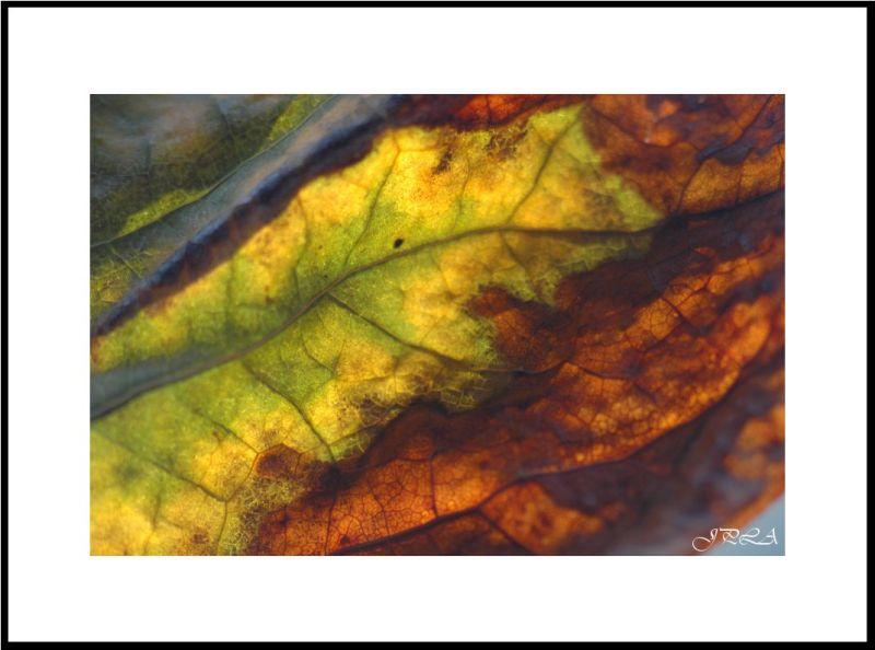 Lumière d'automne #8