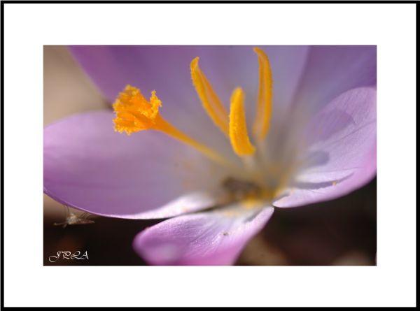 V'la le printemps #2