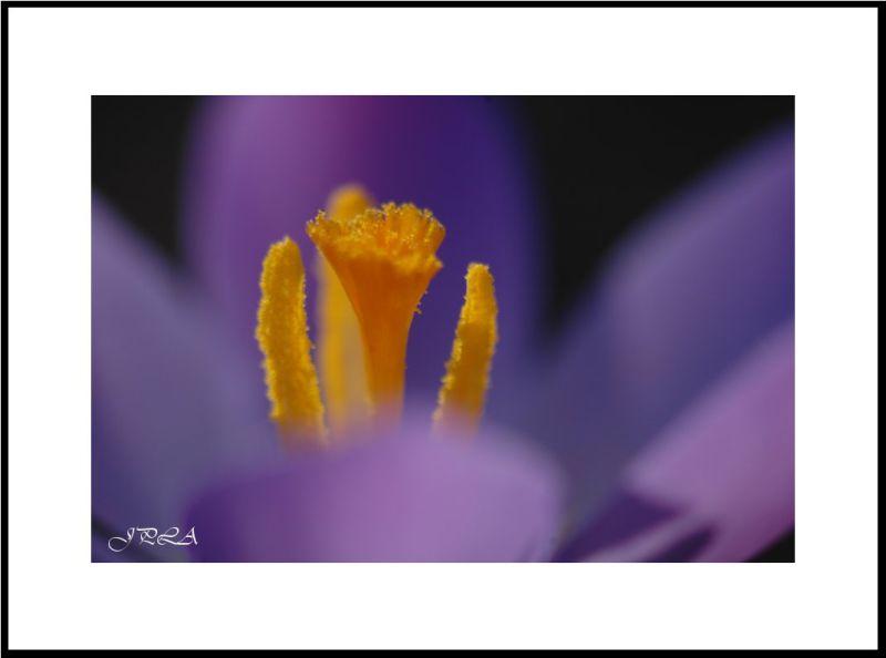 V'la le printemps #3